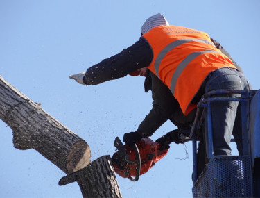 tree felling company Keighley